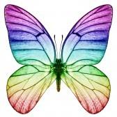 9788295-butterfly-rainbow